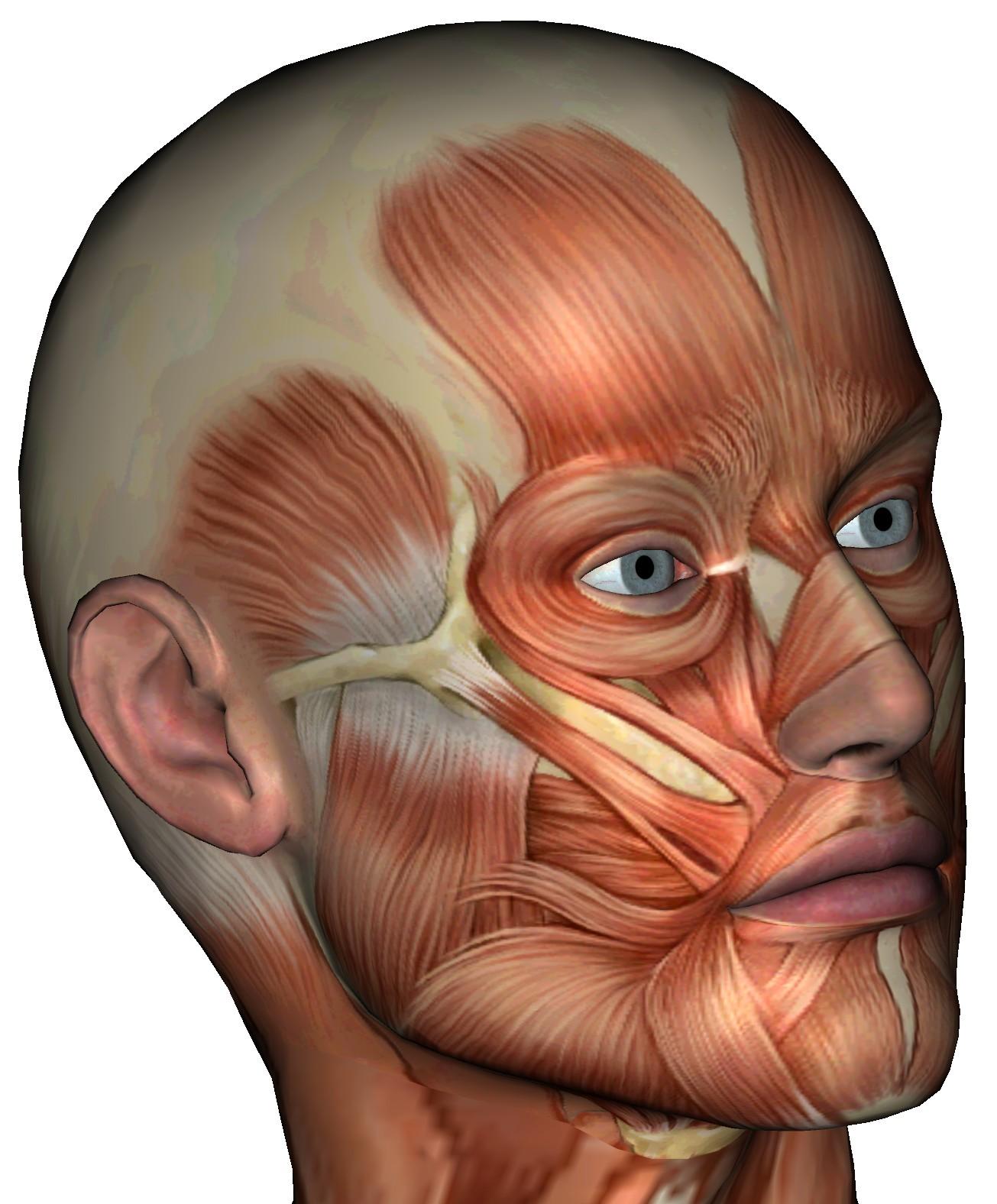 Body Parts Muscles Massage Massage Videos Massage Pictures